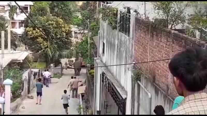 মহানগরীর জিএস রোডে বুনো হাতির ত্ৰাস