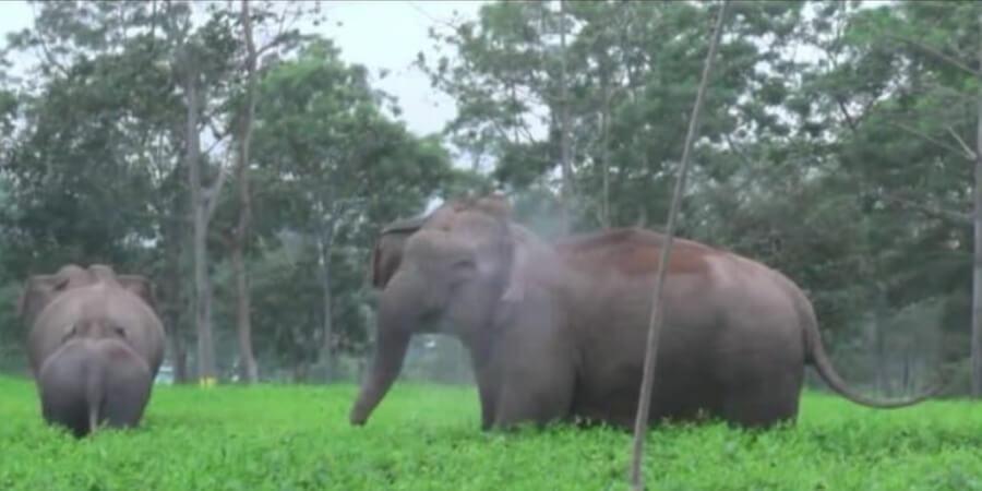নুমলিগড়ে বুনো হাতির তাণ্ডব,আতঙ্কিত গ্ৰামবাসী